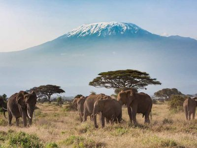 Plains of Africa at Mt. Kilimanjaro