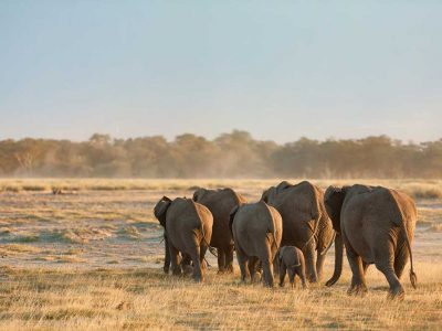 58215526 - group of elephants shot at the back in amboseli, kenya. wide view. shot at sunset.