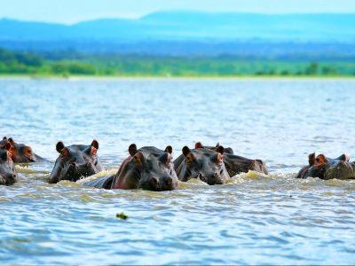 Lake Naivasha 1