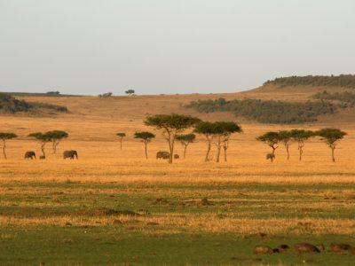 Norhtern Serengeti 2