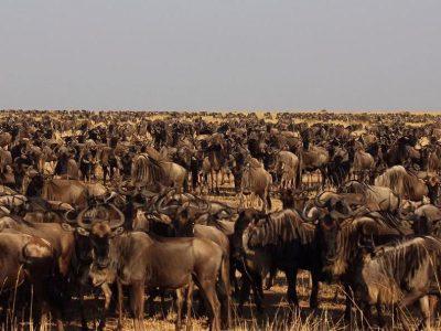 Norhtern Serengeti 4