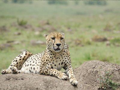 masai mara 2 (2)