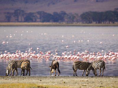Lake-Nakuru-Kenya-safari