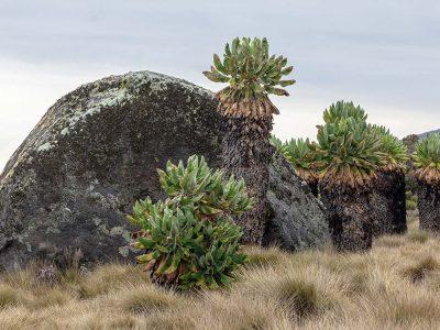 Kilimanjaro popote 4